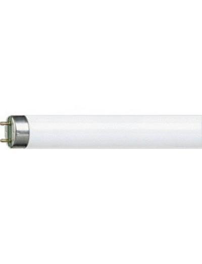 Philips Луминисцентна лампа MASTER TL-D тръбна 36 W G13 студена светлина